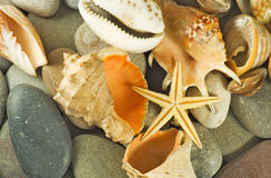 Immagine delle conchiglie e del primo piano delle pietre fotografie stock libere da diritti