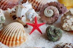 Immagine delle conchiglie e delle stelle marine Fotografia Stock