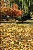 Foglie cadute, autunno Immagine Stock