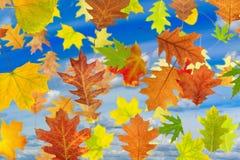 Immagine delle foglie contro il cielo Fotografia Stock