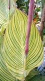 immagine delle foglie verdi Fotografia Stock