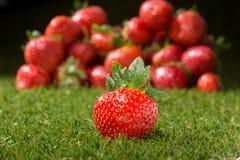 Immagine delle fragole immagini stock libere da diritti