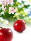 Immagine delle mele nel giardino su un fondo verde Immagini Stock