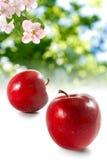 Immagine delle mele nel giardino su un primo piano verde del fondo Fotografia Stock Libera da Diritti