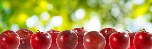 Immagine delle mele nel giardino su un primo piano verde del fondo Fotografia Stock