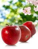 Immagine delle mele nel giardino su una fine verde del fondo su Immagine Stock Libera da Diritti
