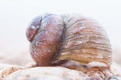 Immagine dettagliata astratta della foto di vecchie coperture a spirale nocive della lumaca Fotografie Stock Libere da Diritti