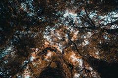 Immagine di angolo basso del cielo attraverso gli alberi Immagine Stock