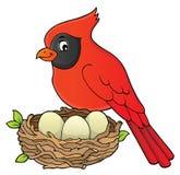 Immagine 8 di argomento dell'uccello Immagine Stock