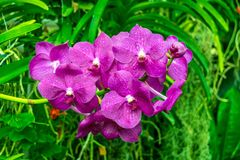 Immagine di bei fiori, colpo ai giardini botanici reali, Kew fotografia stock