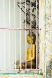 Immagine di Buddha.   Immagini Stock