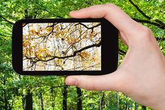 Immagine di cambiamento delle stagioni di autunno e di estate Immagine Stock Libera da Diritti