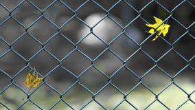 Immagine di concetto di separazione delle foglie sul recinto immagini stock