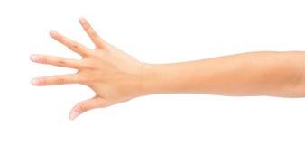 Immagine di conteggio delle mani sinistre della donna Immagine Stock