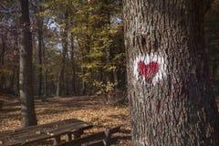 Immagine di cuore rosso dipinta sull'albero Fotografie Stock Libere da Diritti