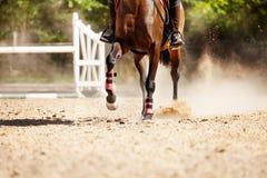 Immagine di funzionamento del cavallo da corsa alla pista della sabbia Immagine Stock