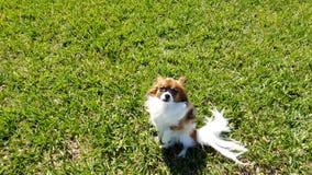 Immagine di gioco con il cucciolo adorabile immagine stock
