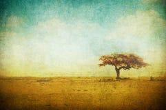Immagine di Grunge di un albero sopra la priorità bassa del grunge Fotografie Stock Libere da Diritti