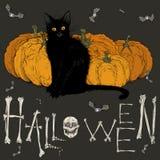 Immagine di Halloween con un gatto nero Fotografia Stock