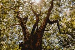 Immagine di luce solare che splende attraverso l'albero immagini stock libere da diritti