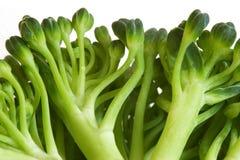 Immagine di macro del broccolo Fotografie Stock Libere da Diritti