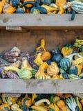 Immagine di piccoli pumkins e cereale in uno scaffale fotografia stock libera da diritti