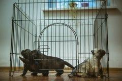 Immagine di piccolo primo piano sveglio del cucciolo dell'interno Immagine Stock
