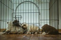 Immagine di piccolo primo piano sveglio del cucciolo dell'interno Fotografia Stock Libera da Diritti