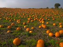 Immagine di priorità bassa del giacimento della zucca di Halloween Fotografie Stock