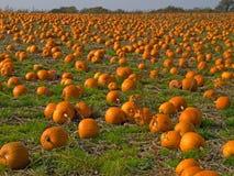 Immagine di priorità bassa del giacimento della zucca di Halloween Immagini Stock