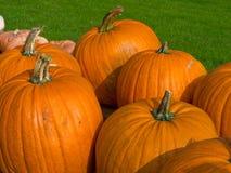 Immagine di priorità bassa del giacimento della zucca di Halloween Fotografia Stock Libera da Diritti