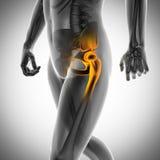 Immagine di ricerca della radiografia delle ossa dell'essere umano illustrazione vettoriale