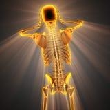 Immagine di ricerca della radiografia delle ossa dell'essere umano Fotografie Stock