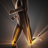 Immagine di ricerca della radiografia delle ossa dell'essere umano Fotografia Stock Libera da Diritti