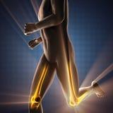 Immagine di ricerca della radiografia delle ossa dell'essere umano Fotografie Stock Libere da Diritti
