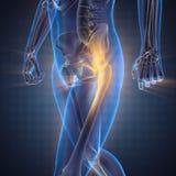 Immagine di ricerca della radiografia delle ossa dell'essere umano Immagine Stock Libera da Diritti