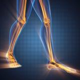 Immagine di ricerca della radiografia delle ossa dell'essere umano Immagini Stock