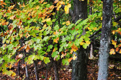 Immagine di riserva del Vermont, U.S.A. Fotografia Stock Libera da Diritti
