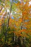 Immagine di riserva del Vermont, U.S.A. Immagini Stock