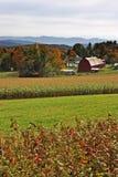 Immagine di riserva del Vermont, U.S.A. Immagine Stock Libera da Diritti
