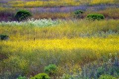 Immagine di riserva della costa centrale di California, Big Sur, U.S.A. Fotografie Stock Libere da Diritti