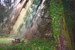 Immagine di riserva della foresta dopo pioggia Fotografie Stock