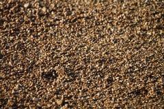 Immagine di sfondo dei ciottoli su una spiaggia Fotografia Stock