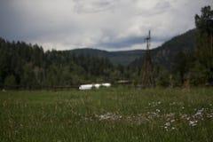 Immagine di sfondo del prato in valle di Colorado Immagine Stock Libera da Diritti