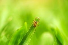 Immagine di sfondo del ragno Immagine Stock