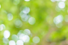 Immagine di sfuocatura di Bokeh astratto di colore verde dell'albero immagini stock
