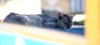 Immagine di specchio del gatto di sonno Fotografia Stock Libera da Diritti