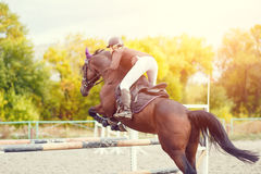Immagine di sport equestre Concorrenza di salto di manifestazione Immagine Stock Libera da Diritti