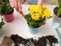 Immagine di suolo, annaffiatoio, vaso da fiori, mani umane con il mestolo Fotografia Stock Libera da Diritti