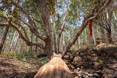 Immagine di taglio dell'albero con il fondo verde della foresta immagine stock